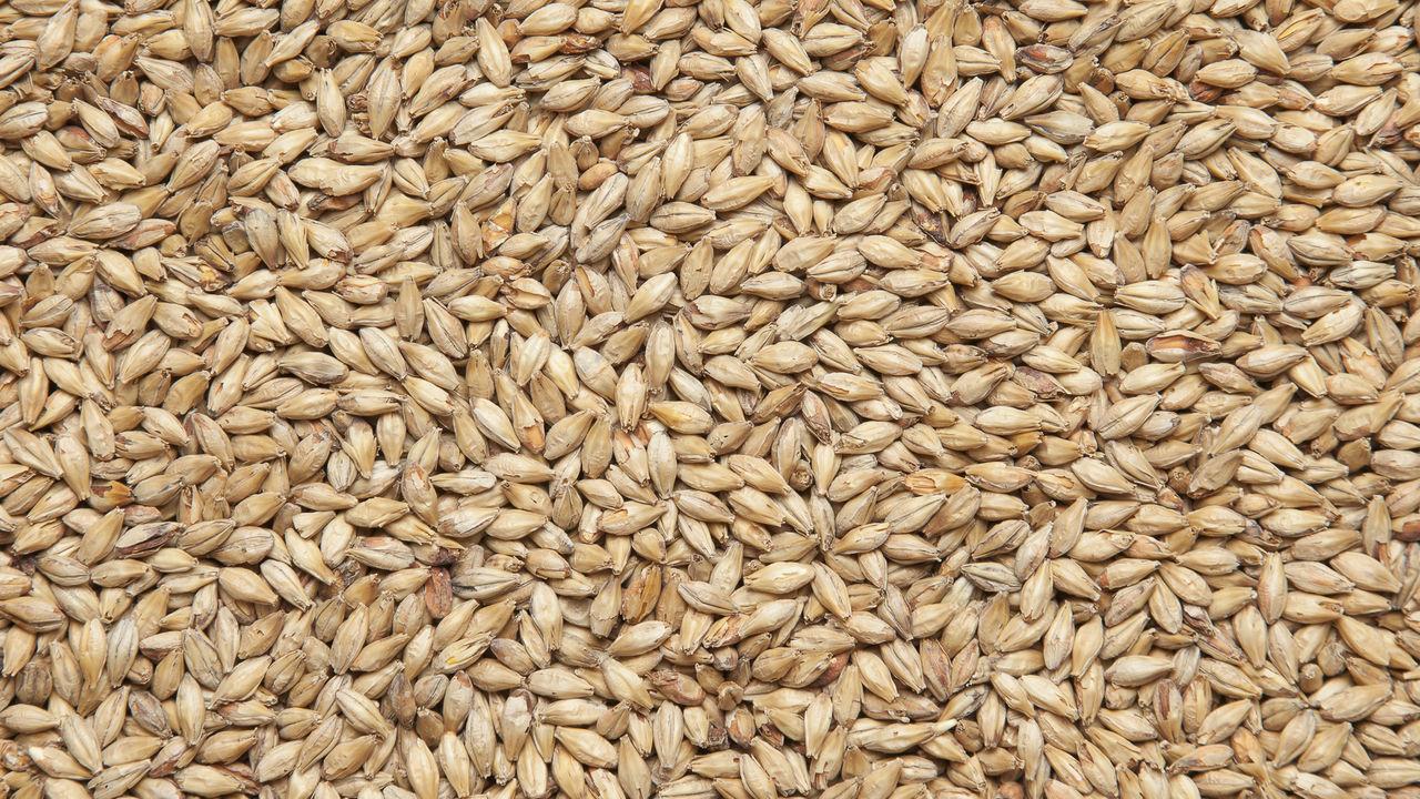 С начала года Россельхознадзор запретил отгрузку более 22 тыс. тонн зерна из Курской области